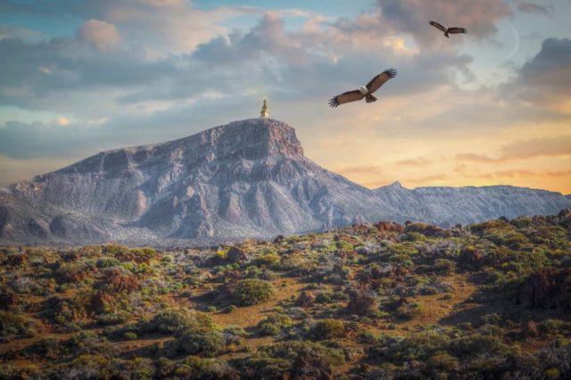 Eagles soaring - Kai Wellness - Los Angeles Acupuncture