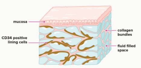 What is fascia - cells and mucosa